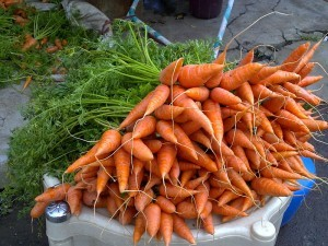 Carrots by Thamizhpparithi Maari for Wikimedia